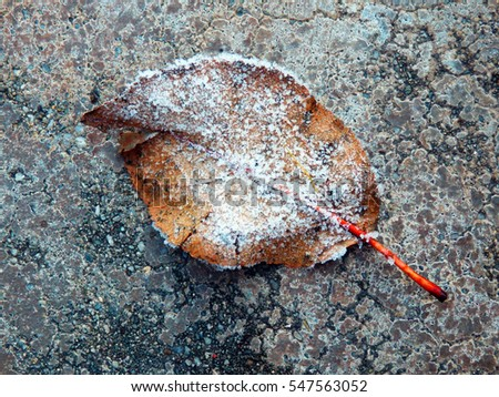 color macro photography of frozen leaf on concrete