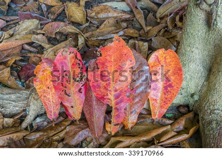 Color of leaves on the ground.