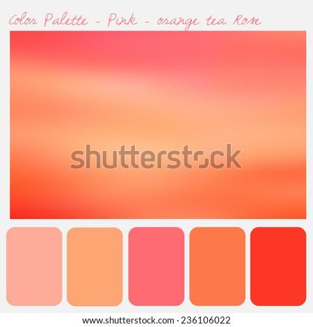 Color palette - Pink- orange tea rose - stock photo