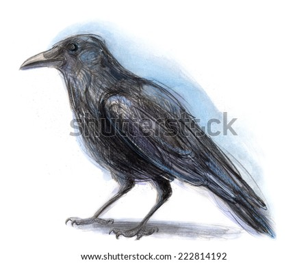 Color pencil drawing of a crow. Bitmap illustration.