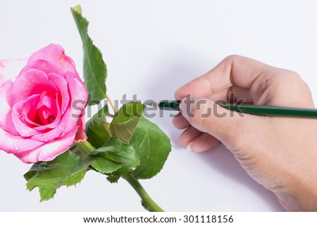 Color pencils draw flower. - stock photo