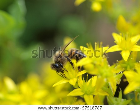 Color photo of bees on a flower. Image close-up