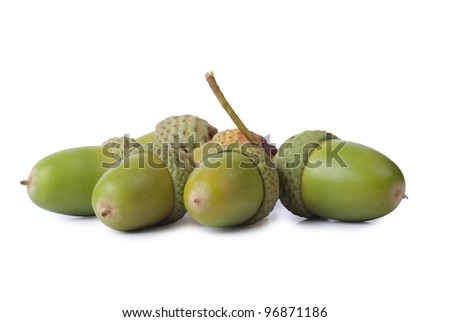 Color photo of green acorns on a white background - stock photo