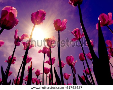 Color photograph of red tulips in a sky - stock photo