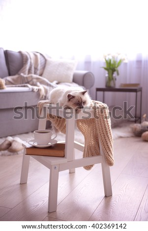 Color-point cat with scarf lying on white chair in living room - stock photo