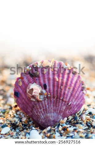 Color sea shell on the beach - stock photo