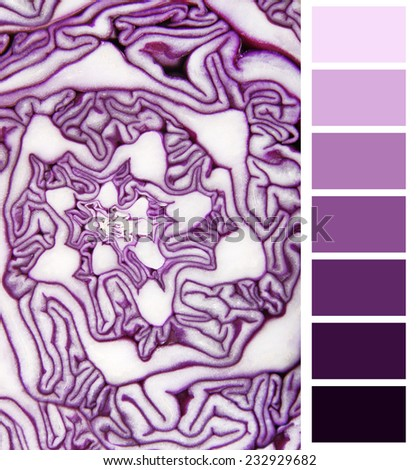 color selection violet cabbage complimentary palette chart - stock photo