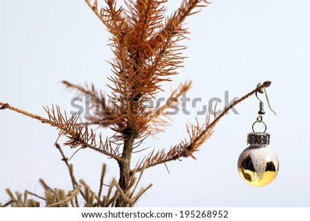 Color shot of a small dead Christmas tree. - stock photo