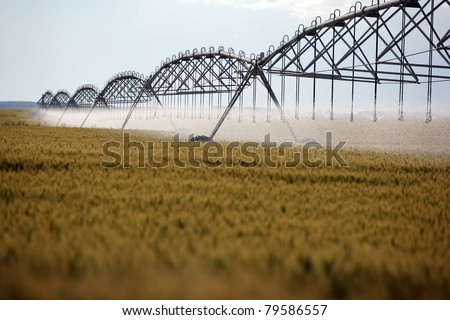 Color shot of an irrigation equipment on a wheat field - stock photo