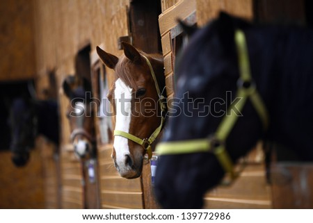 Color shot of some horses in a stable - stock photo