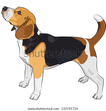 color sketch of the dog Beagle breed - stock photo
