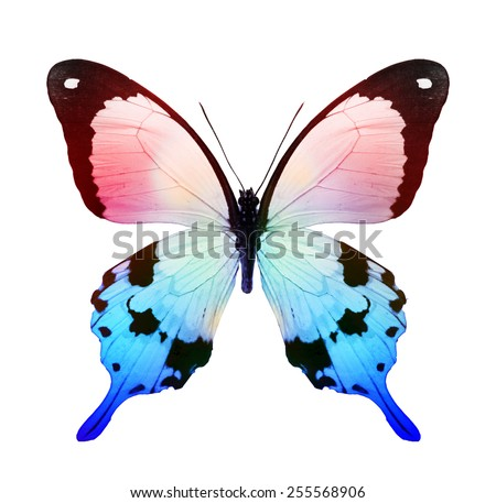 Color tropical butterfly , isolated on white - stock photo