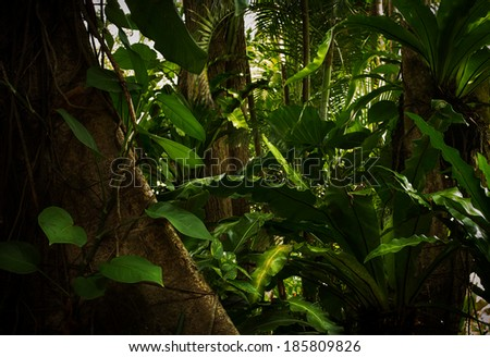 color  view of nice color misty  tropical jungle - stock photo