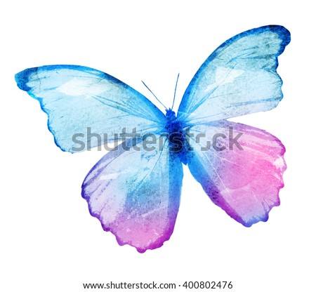 Color watercolor butterfly, isolated on white background - stock photo