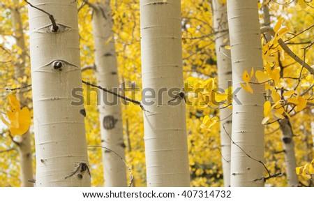 Colorado Autumn - stock photo