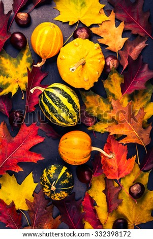 Colored autumn leaves and miniature pumpkins on a gray board, fall concept,  viewed from above - stock photo