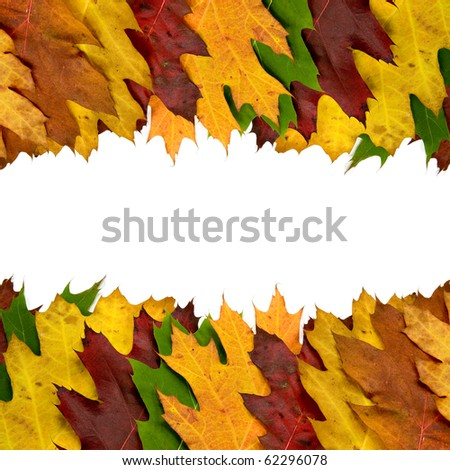 colored autumn leaves border for your text