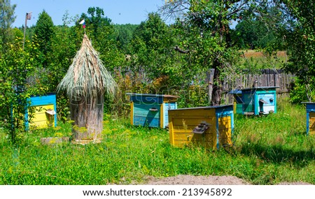 Colored beehives on apiary   in the sunny day - stock photo