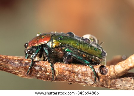 Colorful horned beetle - photo#26