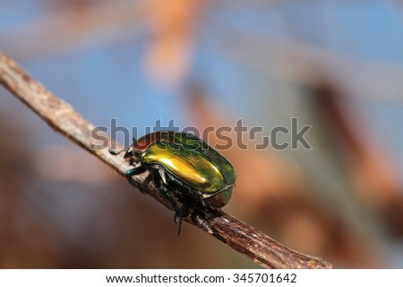 Colorful horned beetle - photo#28
