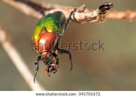 Colorful horned beetle - photo#22