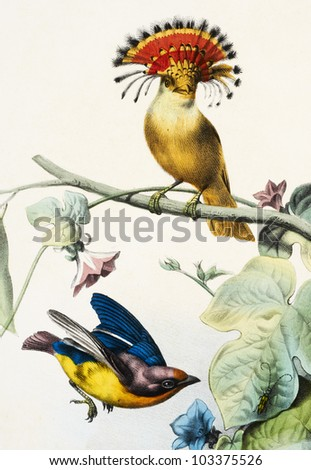 colored bird in withe background - stock photo