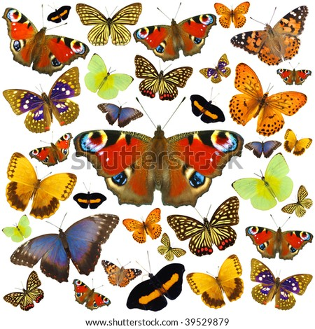 Colored butterflies isolated on white - stock photo