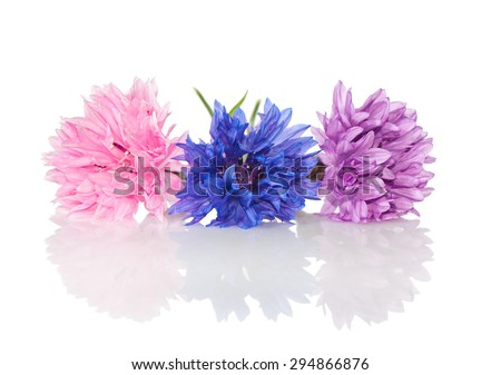 Colored cornflowers close-up over white. - stock photo