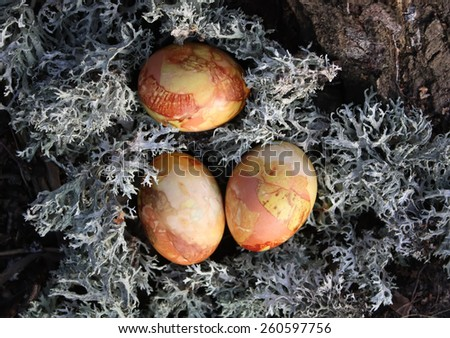 Colored Easter eggs on moss in the forest.  - stock photo