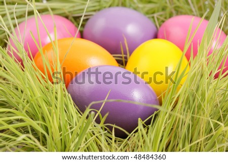 colored eggs close-up
