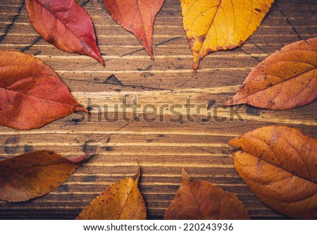 Colored fall leaves on a wooden background - stock photo
