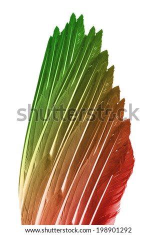 Colored feathers, Feathers of wild birds - stock photo