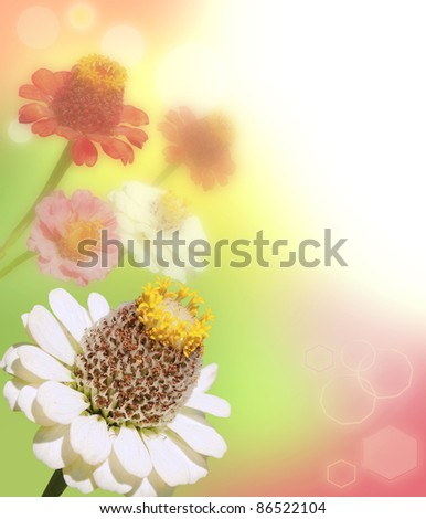 colored gerber flowers with blur shimmer background