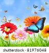 colored gerber flowers with exotic butterflies - stock photo
