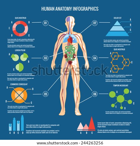 Colored Human Body Anatomy Infographic Design on Blue Green Background. - stock photo