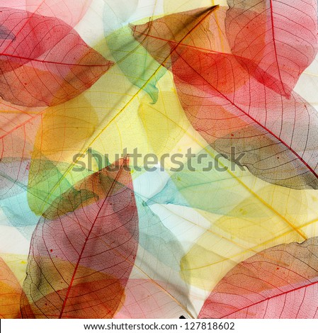 Colored leaves background - stock photo