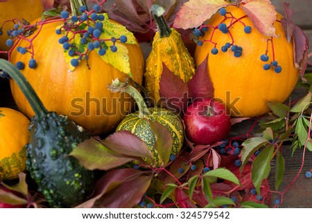 colored october, autumn decoration, happy haloween