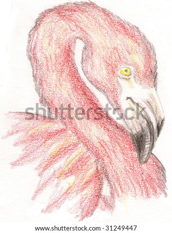 Colored Pencil Sketch of a pink flamingo head, over a white background. - stock photo