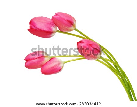 Colored Tulip Flowers Isolated on White Background. Macro. National Flower of The Netherlands, Turkey and Hungary - stock photo
