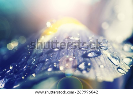 colorfu blue flower with rain drops and sun beams ,abstract colorful background - stock photo