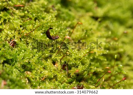 Colorful abstract natural background of green moss and seeds with water drops closeup on blurred background  - stock photo