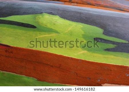 Colorful abstract pattern of Eucalyptus tree bark  - stock photo