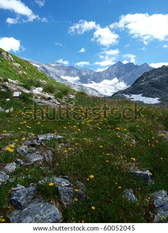 colorful alpine flowers on the mountain slopes - stock photo