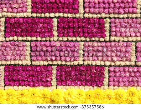 Colorful amaranth flowers texture background - stock photo