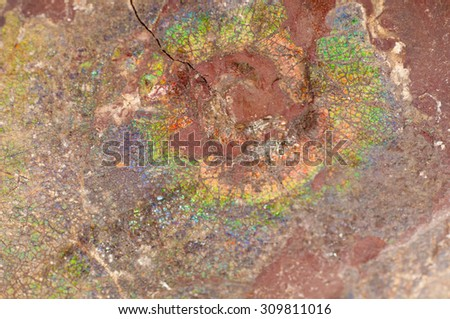 colorful ammonite crystal shell fossil in sedimentary rock - stock photo