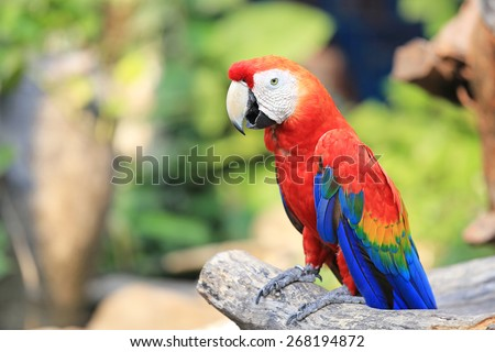 Colorful and Beautiful macaw, Red Macaw, Red Parrot - stock photo