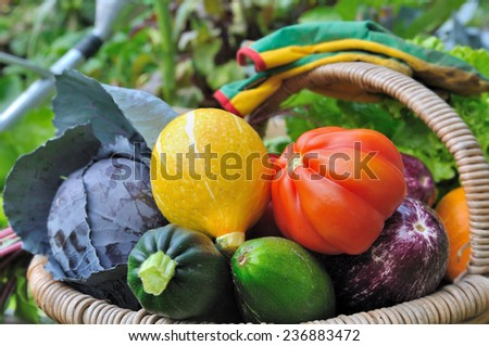 colorful and beautiful vegetables in basket in a vegetable garden  - stock photo