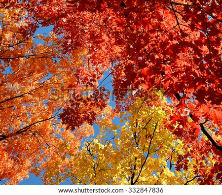 Colorful and bright autumn leaves and blue sky background/Colorful autumn leaves/Colorful autumn leaves - stock photo