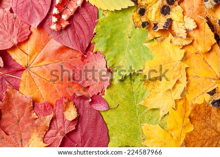 Colorful and bright autumn leaves background - stock photo