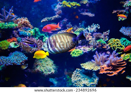 Colorful aquarium, showing different colorful fishes swimming - stock photo
